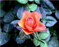 Цветочки-c8
